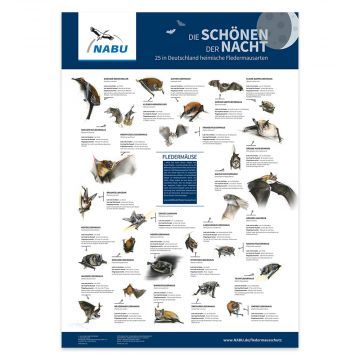 """Poster """"Die Schönen der Nacht. 25 in Deutschland heimische Fledermausarten"""