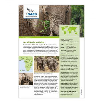 Artensteckbrief - Afrikanischer Elefant
