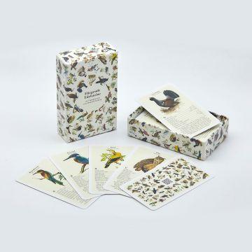 Fliegende Edelsteine – Das Vogelquartett