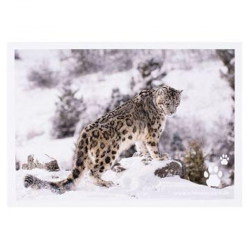 Postkarte Schneeleopard steht auf einem Stein