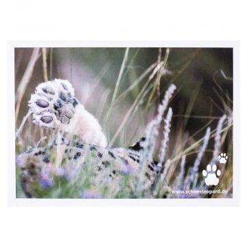 Postkarte Pfote eines jungen Schneeleoparden