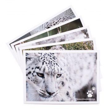 Postkartensets Schneeleoparden