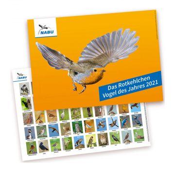 Das Rotkehlchen - Vogel des Jahres 2021 - Poster