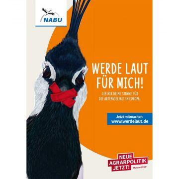 """Flyer """"Werde laut!"""" Kiebitz"""