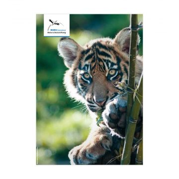 Artensteckbrief Tiger