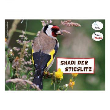 Erlebter Frühling: Steckbriefkarte Stieglitz