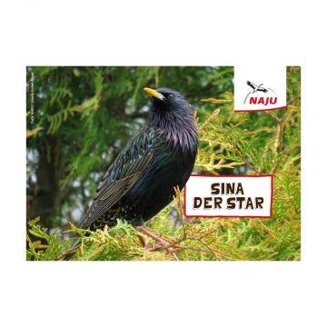 Erlebter Frühling: Steckbriefkarte Star