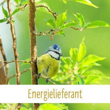 Energielieferant