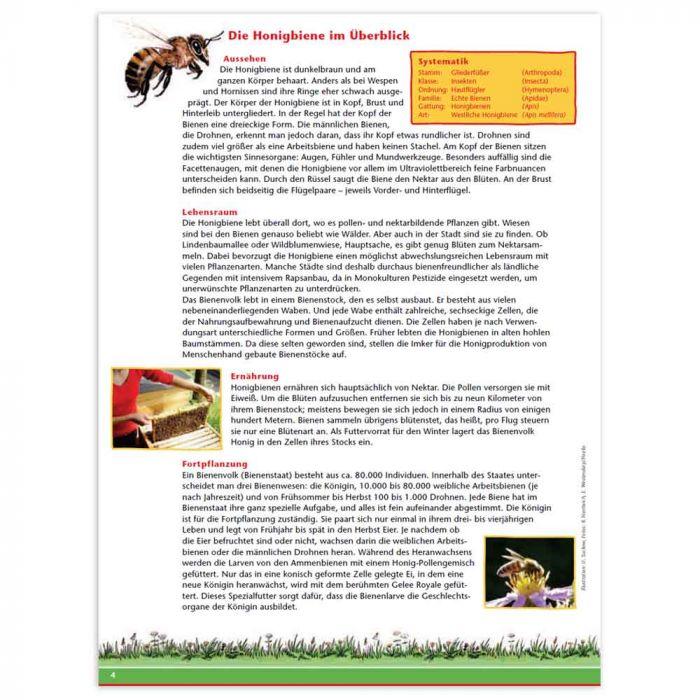 Aktionsheft Honigbiene