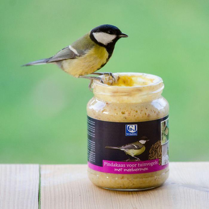 Vogel-Erdnussbutter Mehlwürmer