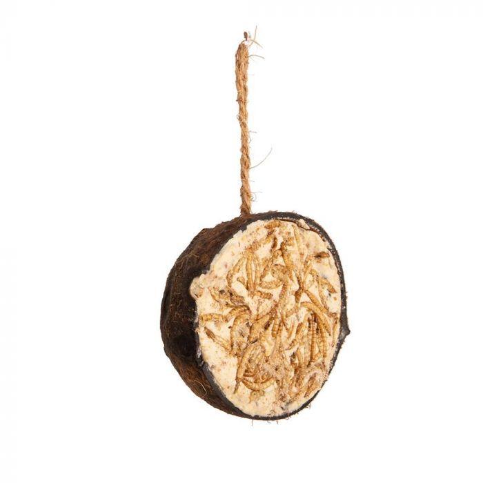 Kokosnuss mit Mehlwürmern, halb