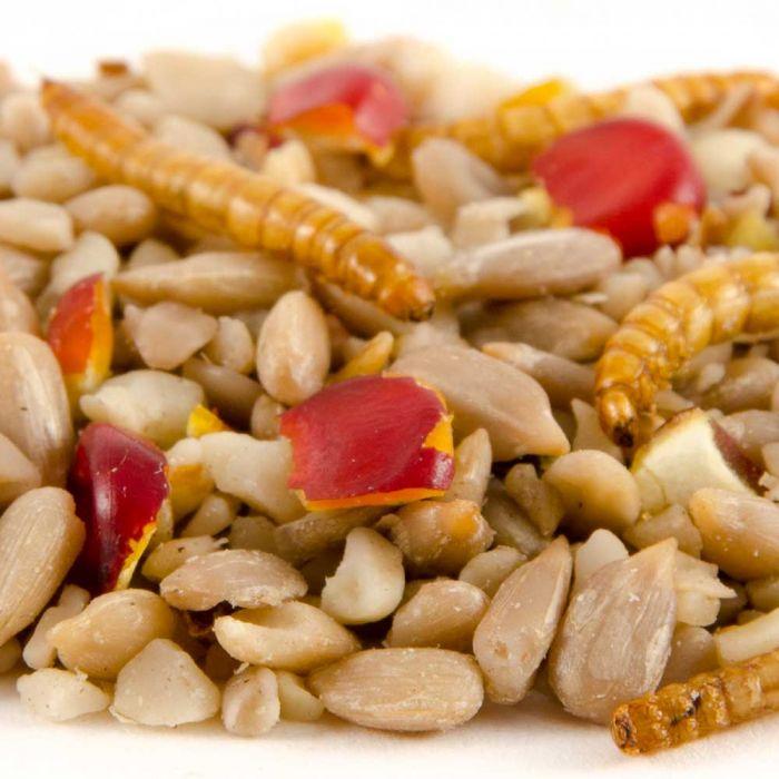 Energiereiche Samen Deluxe, 1kg-10kg