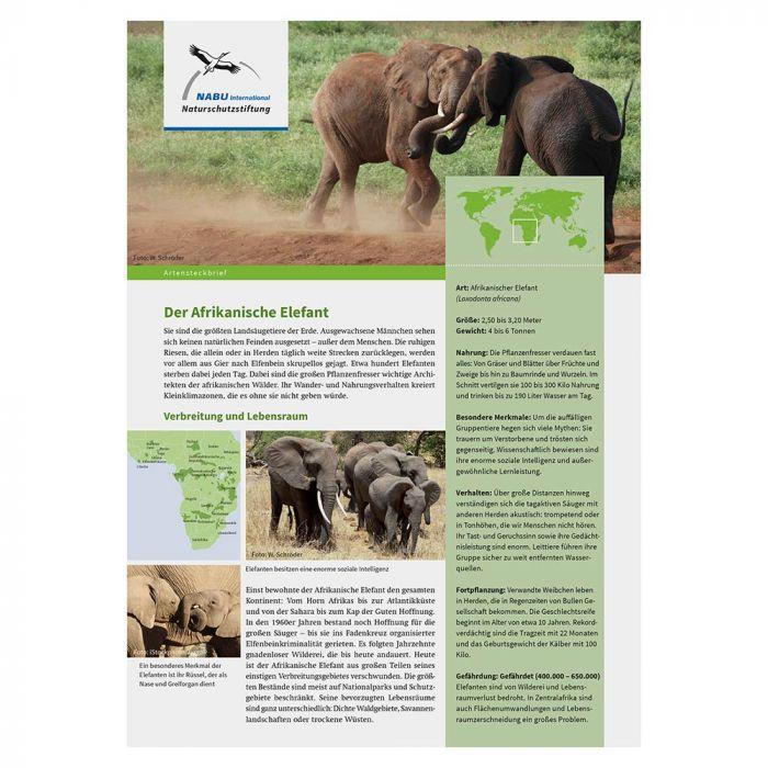 Artensteckbrief afrikanischer Elefant