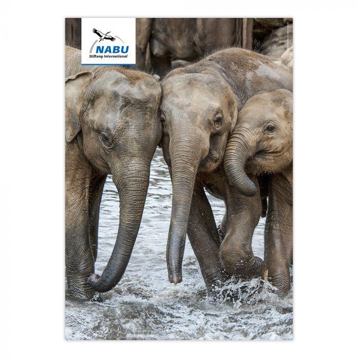 Artensteckbrief - Asiatischer Elefant