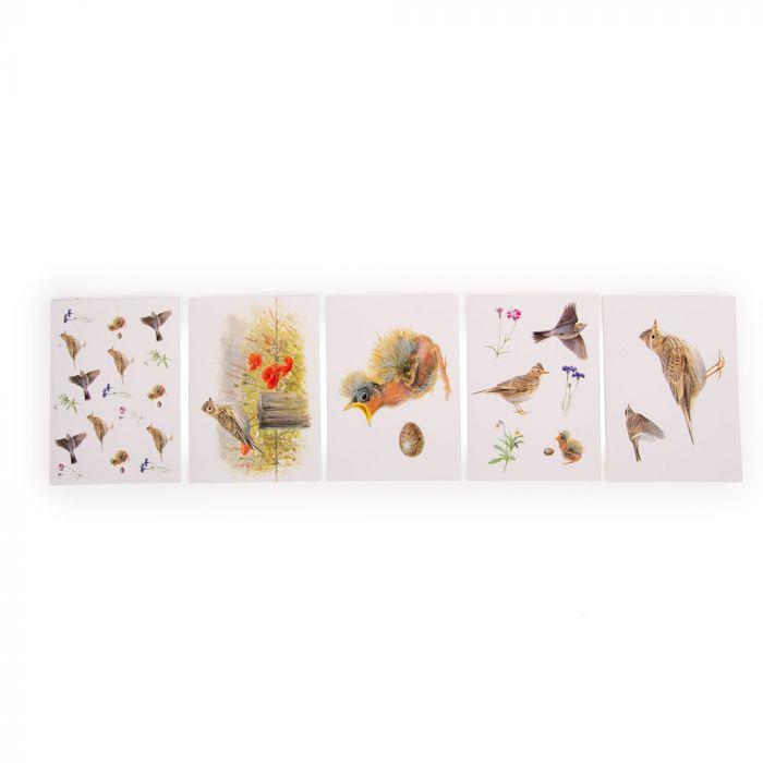 Grusskarten-Set Feldlerche - Vogel des Jahres 2019