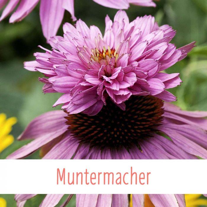 Muntermacher