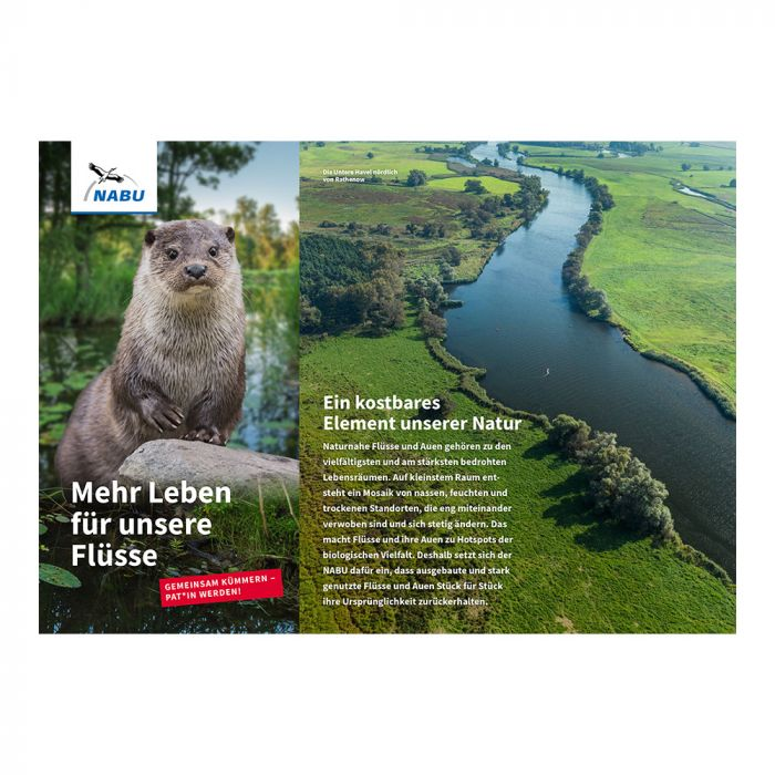 Mehr Leben für unsere Flüsse - Flusspatenschaft