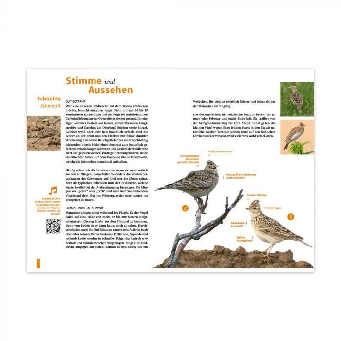 Die Feldlerche – Vogel des Jahres 2019 (Infobroschüre)