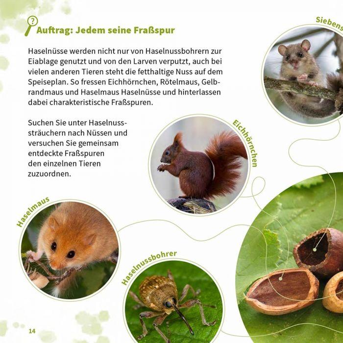 Krabbler, Kriecher und Kraucher - Wunderwelt der Käfer