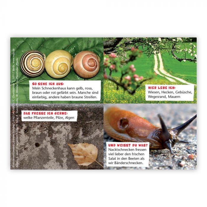 Erlebter Frühling: Steckbriefkarte Bänderschnecke