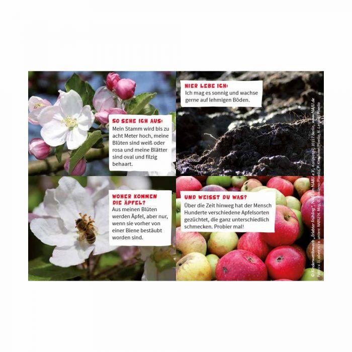 Erlebter Frühling: Steckbriefkarte Apfelbaum