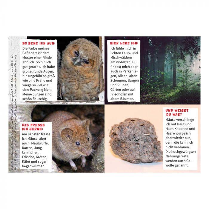 Erlebter Frühling: Steckbriefkarte Waldkauz