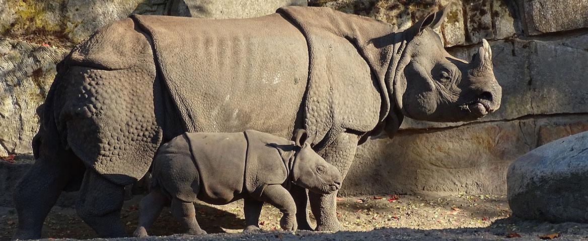 Nashornschutzprojekt