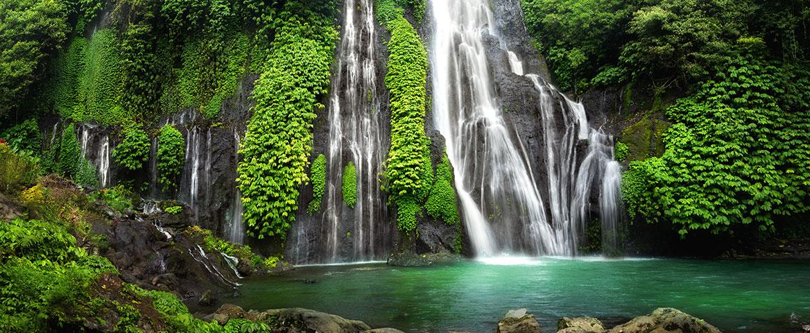 Schutz des Regenwaldes
